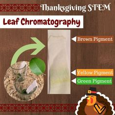 This leaf chromatography science experiment shows what will happen when our green leaves turn colors in the fall. Stem Learning, Project Based Learning, Learning Resources, Math Stem, Third Grade Science, Science Lessons, Stem Activities, Teaching Tips, Green Leaves