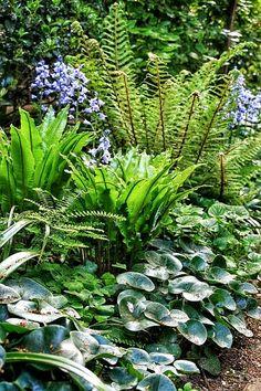 New ideas flowers garden plans shade - garden landscaping Shade Garden Plants, Garden Shrubs, Garden Paths, Hosta Gardens, Planters Shade, Shaded Garden, House Plants, Back Gardens, Outdoor Gardens