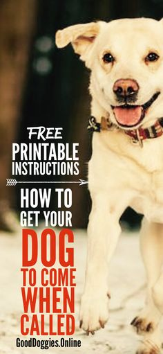 Teach your dog to come when called with these 7 easy steps. Plus grab the free printable to take with when your training. #dogs #recall