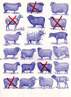 sheeps by pavel_pahom, via Flickr