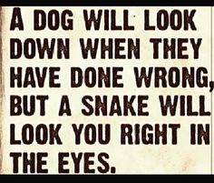 Snakes are incapable of even the small amount of conscience that our dogs have. Its' simply psycho-biology. And there are people with the same incapability. Run from them.
