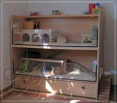 Meerschweinchen Cafe - Shellys Eigenbau