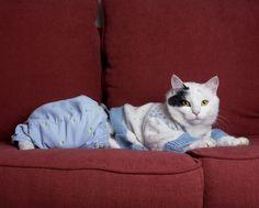Wilma Hurskainen: Cat Baby, from the series No Name, 2008  C-print on aluminium  48 x 60 cm