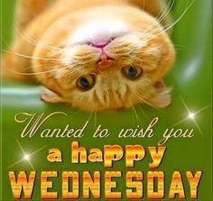 Happy Wednesday.