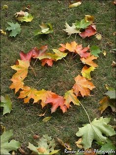 Fallen coloured leaves arranged into a heart.  Love the photo!