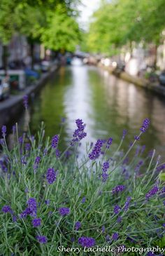 Canal in Amsterdam.