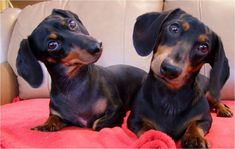 We didn't do it. doxie