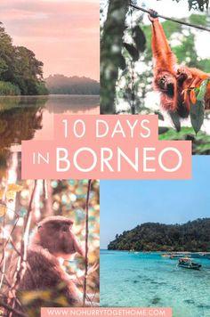 Borneo Itinerary: 10 Days Through Sarawak + Sabah Borneo Travel, Malaysia Travel, Asia Travel, Cool Places To Visit, Places To Travel, Amazing Destinations, Travel Destinations, Orangutans, Travel Guides