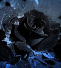 voodooprincessrn: Beautiful beautiful You can. Black Roses Wallpaper, Black Phone Wallpaper, Flower Wallpaper, Dark Flowers, Beautiful Rose Flowers, Exotic Flowers, Black Magic Roses, Red Roses, Black Rose Flower