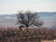 Immagini delle Langhe in inverno. Viaggiare per immagini. Santa Vittoria d'Alba, i vigneti, Langhe e Roero