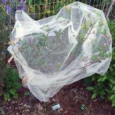 Check out these tips from Mother Earth News readers on how to deter birds from blueberry bushes with tulle and much more!