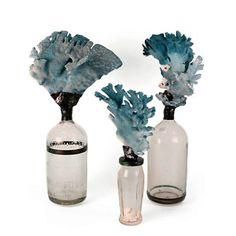 Blue Coral Bottles