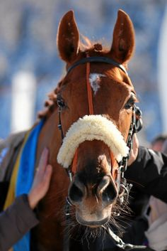 White Turf - One of the Top Sporting Events in Switzerland. Horse racing and Skikjöring on the Frozen lake at St Moritz in the Swiss mountains St Moritz, Harness Racing, Racing Events, Top Destinations, Thoroughbred, Belle Epoque, Horse Racing, Grand Prix, Switzerland