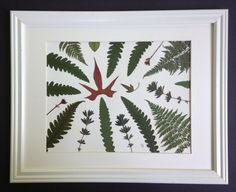 Pressed Botanical Art Featuring Sweet Potato and Ferns by Lois Lawrence $95.00
