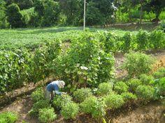 ♥ Nam Yang's small farm ♥ http://www.kungfuretreat.com/ LIKE US ON https://www.facebook.com/shaolinkungfuretreat FOLLOW US ON: https://twitter.com/KungFuRetreat and http://instagram.com/namyangkungfu #kungfu #shaolin #meditation #retreat #chikung #health #fitness #wellness #qigong #Thailand #PaiThailand #namyang #health #farm #organic
