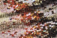 macro photo of butterfly wing