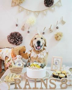 Your Dog is chewing things he shouldn't ? Need our Secret to using your dog's natural intelligence to stop bad behavior? Click the link and enter your email NOW Dog First Birthday, Puppy Birthday Parties, Puppy Party, Animal Birthday, Dog Parties, Dog Cakes, Birthday Pictures, Animal Party, Shih Tzu
