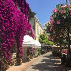 Colourful Capri #italy #capri #summer #sunshine #amalficoast #flowers #foliage #colourful #toohot #instatraveling #holidays #instapic #instadaily #italian_places #italy_vacations #italy_photolovers #italytravel