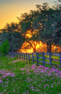 ~~Springtime Sunset Afterglow | wildflowers and the tropical sun as it sets behind a field of trees, central Florida | by Lewis Mann~~