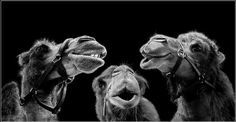 """small talk"" composite photo by Gabriele Steiner"