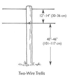 Grape Trellis Plans Onewire Trellis mostly for raisin or table grapes Training system Grape Vine Trellis, Wire Trellis, Grape Vines, Fruit Garden, Vegetable Garden, Grape Vineyard, New Vines, Grape Arbor, Growing Grapes