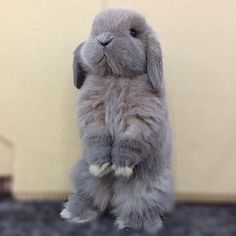 In case you are searching for a furry friend which is not only adorable, but simple to keep, then look no further than a pet bunny. Cute Baby Bunnies, Baby Animals Super Cute, Cute Little Animals, Cute Funny Animals, Lop Bunnies, Bunny Bunny, Cute Bunny Pictures, Baby Animals Pictures, Cute Animal Pictures