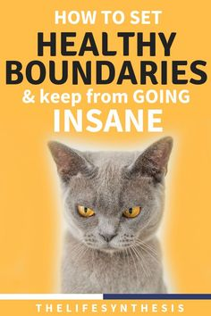 Set healthy boundaries and sky rocket your productivity. If you don't build the fense that makes others value your time, they wont! Success Mindset, Positive Mindset, Productivity Quotes, Productive Things To Do, Personal Development Books, Learning To Say No, Personal Relationship, Time Management Tips, Self Improvement Tips