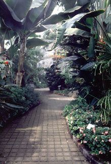plants to grow in large conservatory - Google Search