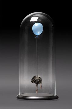 Polly Morgan. Still Birth Blue. Taxidermy. Bird. Balloon. www.naturalhistory.co.uk