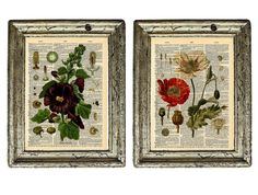 Set of 2 Vintage Botanical Flowering Illustrations by AvantPrint, $14.00