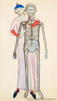 Human dissection, 14th century artwork from Anathomia (1345), by anatomist Guido da Vigevano. This chap was the first person to provide anatomical drawings in his manuscripts. He also pioneered standing dissections, picture here.