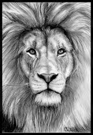 Lion Head Drawing Sketch - Izu The Lion Pencil Drawings Of Animals Lion Art Realistic Stunning Lion Drawing Lion Face Drawing Lion Drawing Face Lion Face Sketch Images At Painti. Realistic Animal Drawings, Pencil Drawings Of Animals, Animal Sketches, Drawing Sketches, Art Drawings, Drawing Animals, Sketching, Pretty Drawings, Drawing Tips