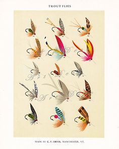 fly fishing print... bright and colorful Trout fish by artdeco