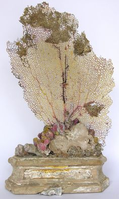17th century Italian altar base (Florence) decorated with a sea fan, barnicals, fossil shells, and coordinating fragments.