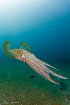 Squid.  Swam with a family of these in Dominican :)