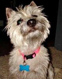 Create a Mandatory Animal Abuse Registry.    http://forcechange.com/
