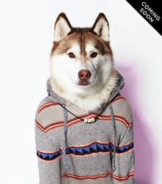 The American Beagle Outfitters Dog Line Is The Cutest Thing You've Ever Seen American Outfitters, Eagle Outfitters, American Beagle, Dog Line, Cute Dog Clothes, Dogs Of The World, Puppy Love, Best Dogs, Cute Dogs