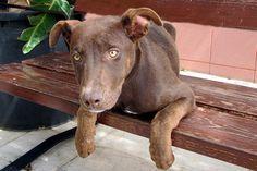 Manoli es una cachorra simpatiquísima. Le encanta jugar y recibir mimos. ¿Quieres conocerla?