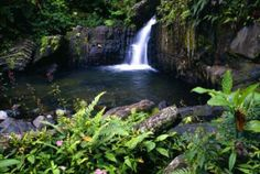 El Yunque National Forest is found on the North Eastern side of Puerto Rico, and is the only tropical rainforest in the United States National Forest System.