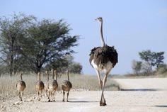 Central Kalahari Game Reserve in Botswana