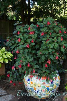 Mike & Linda Darcy's Garden - eyeofthelady