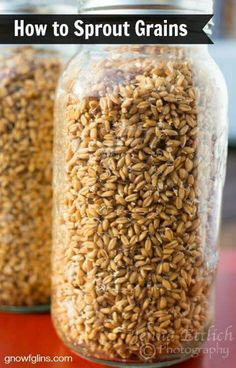 Sprouting grains is very easy. In fact, so easy, that I myself am surprised. I have resisted trying to sprout grains for flour because I… Sprouting Seeds, Sprouting Grains, Raw Food Recipes, Healthy Recipes, Sprouted Grain Bread, Cooking Tips, Cooking Recipes, Quinoa, Nourishing Traditions