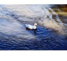 """#ducks #birds #animals #reflection #river #riverside #water #nature #naturephotography #naturelovers #outdoors #outdoorsphotography #colors #usa #california #sacramento #americanriver #neighborhood #dailywalk #longwalks #photography #photooftheday #nofilter #travel #travelgram #travelphotography #explore #exploring #beautiful #inspirationg"" by (bojanapasajlic). outdoors #river #photooftheday #nofilter #beautiful #birds #water #inspirationg #colors #outdoorsphotography #longwalks #travel…"