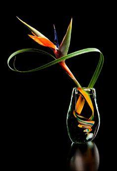 Whispering Flowers<br>Ikebana
