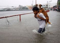 humans saving animals/ this boy was unlucky enough to be caught in the flood waters brought by monsoon rain in Manila, the Philippines. Carry his dog through it to safety! Save Animals, Animals And Pets, Huracan Patricia, Mans Best Friend, Best Friends, Monsoon Rain, Powerful Pictures, Amazing Pictures, Faith In Humanity Restored