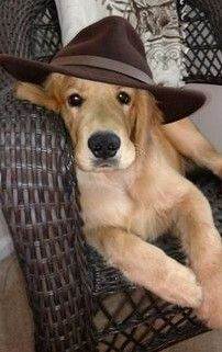 Puppy Pictures, Dogs And Puppies, Paradise, Animals, Link, Dog Photos, Animales, Animaux, Animal