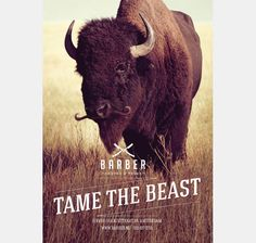 Tame The Beast Barber Shop Campaign: Wild Animals with Mustaches | HiConsumption