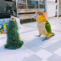 Parrot dancing with Christmas tree Funny Birds, Cute Funny Animals, Cute Baby Animals, Funny Cute, Animals And Pets, Funny Animal Videos, Funny Animal Pictures, Pretty Birds, Beautiful Birds