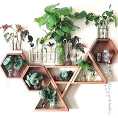 plant shelfie plant display plants on walls plant gang plant family small plants. plant shelfie plant display plants on walls plant gang plant family small plants – New Ideas Room Ideas Bedroom, Bedroom Decor, House Plants Decor, Cute Room Decor, Plant Shelves, Corner Plant Shelf, Aesthetic Room Decor, Indoor Plants, Small Plants
