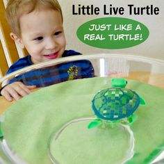The Little Live Turtle is just like a REAL turtle... read our review http://www.best-gifts-top-toys.com/2015/12/tyler-loves-the-little-live-pets-turtle-toy/ #BestGifts